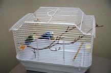 cage_hygiene-1
