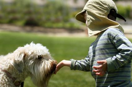dog_-_child_feeding_dog