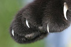 cat_-_paws_small