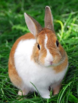 farm-rabbit