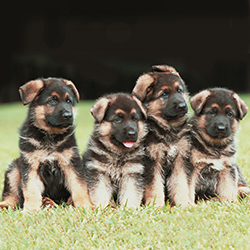 puppies-orphanded-1_2009
