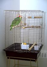 housing_large_birds-1