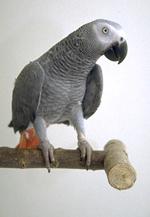 housing_large_birds-2