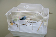 housing_small_birds-1
