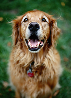walking_your_dog_for_weight_loss-2_2009