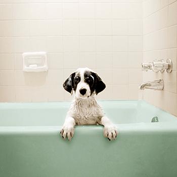 dog_bath