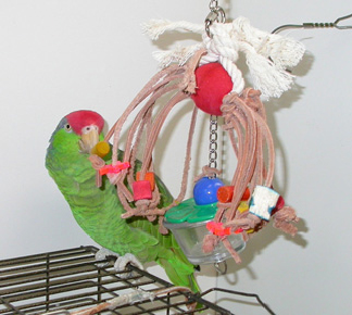 toys_for_birds-2