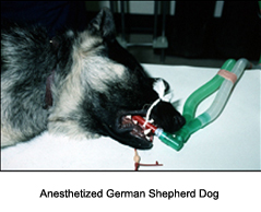 cryosurgery_in_the_dog-1_-_2009