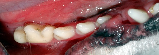 Severe stomatitis in lower jaw, affecting the tongue