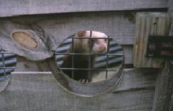 ferrets-housing-1