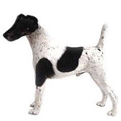Photo of Wire Fox Terrier