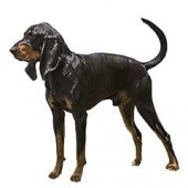 Photo of Black and Tan Coonhound