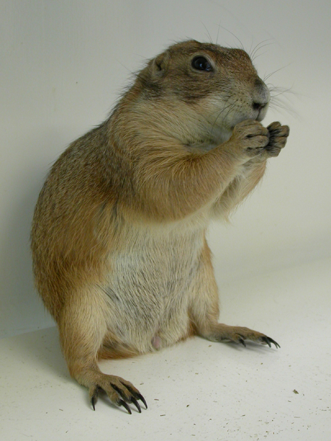 prairie_dogs_-_owning-1
