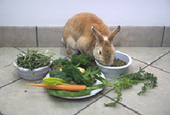rabbits-feeding-1