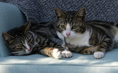 two_cats