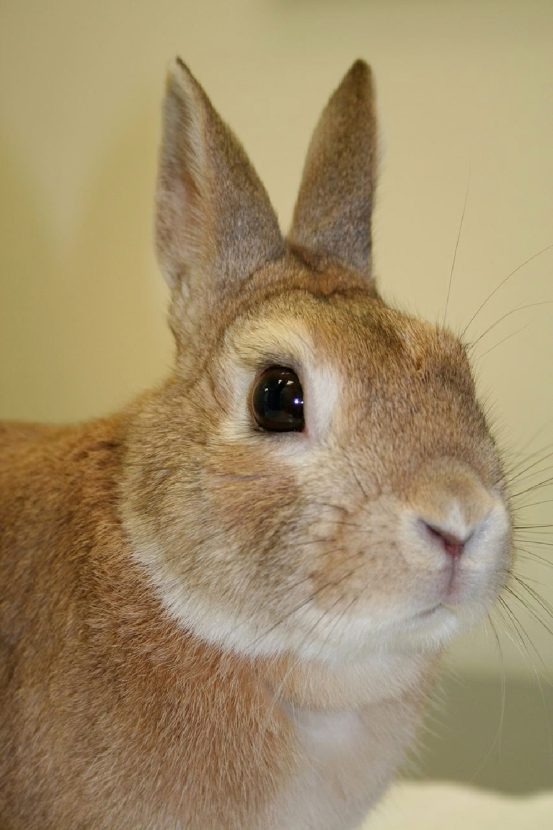 rabbits-problems-1