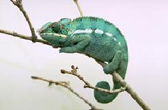 reptiles_-_choosing-1