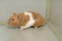 rodents-housing-1