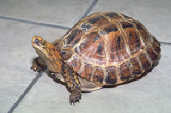 turtles-box-diseases-1