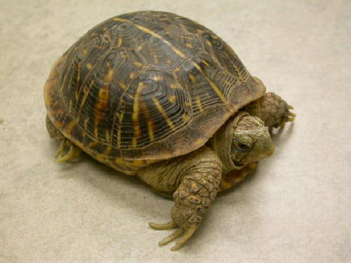 turtles-box-feeding-1