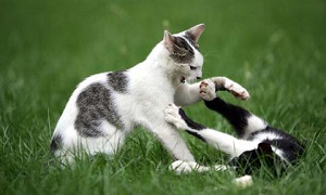 cats_perils-of-outdoor-living