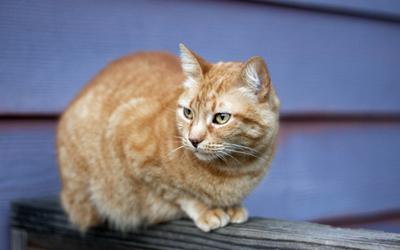 cat-6
