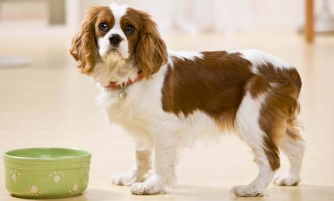 arthritis-and-nutrition-for-dogs