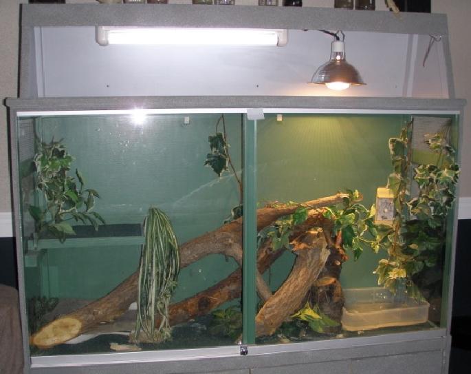 reptiles_-_proper_lighting-2