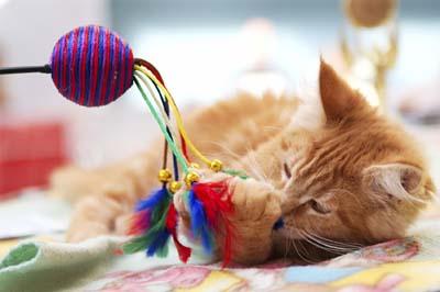 behavior-management-cat2