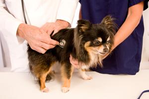 nutrition-dogs-heart-disease1