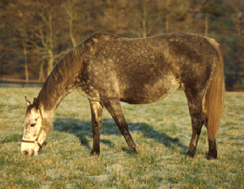 caring_for_the_older_horse_or_pony-1