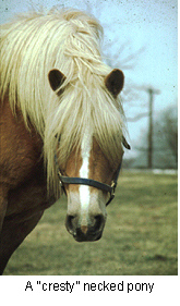 equine_metabolic_syndrome-1
