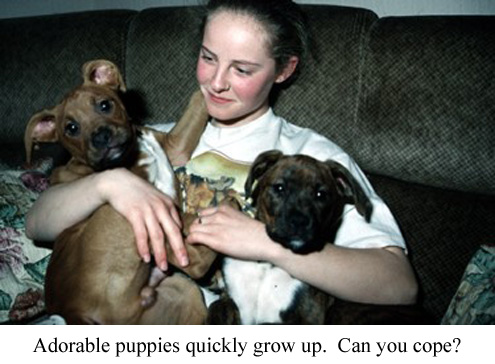 a girl holding several puppies
