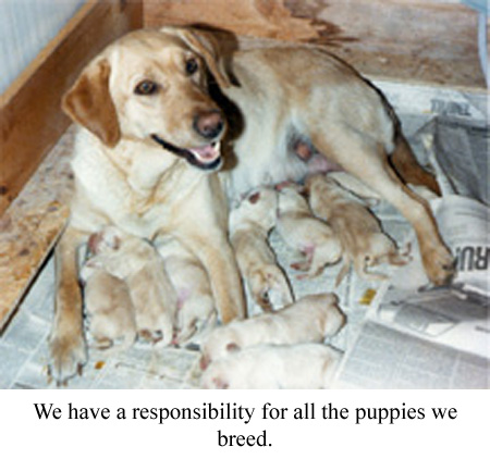a mother dog with puppies