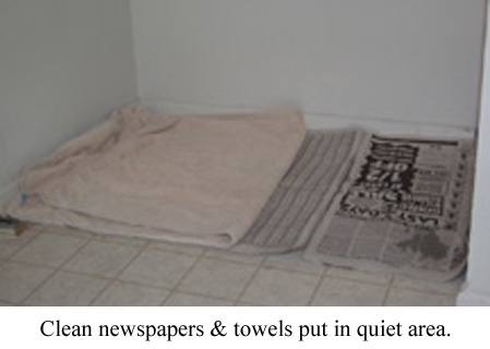 clean newspapers and towels for whelping