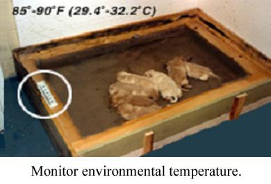 monitor environmental temperature