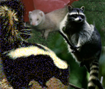 animals affected by distemper