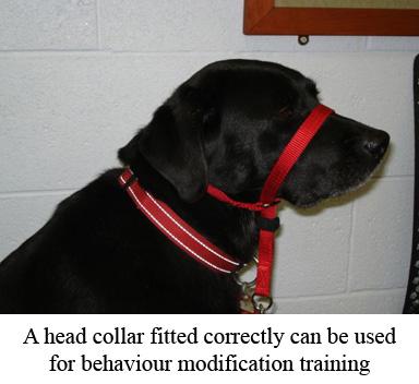 dog wearing a head collar