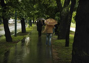 istock_000048771048_large_dog-walking-safety