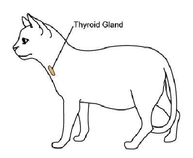cat-thyroid