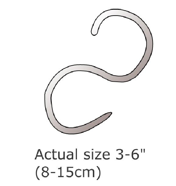 roundworm_infection-1