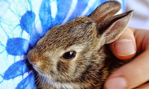 bunny-blue