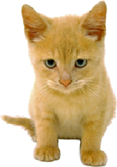 kittens_-_recommendations_for_new_owners-1