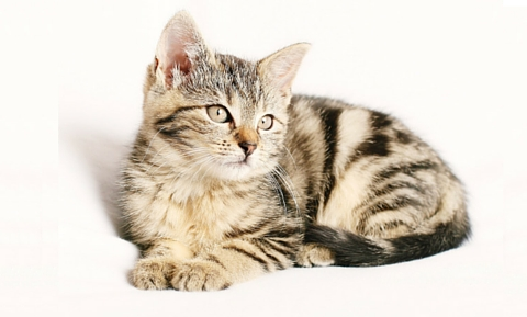 preventative_healthcare_cats