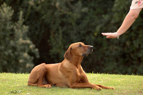 aggression_in_dogs_-_toward_family_members
