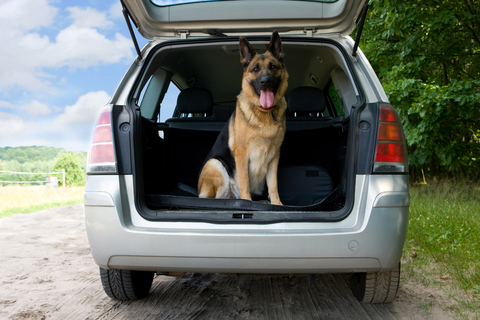 air_and_car_travel_in_dogs__behavior_and_training_3