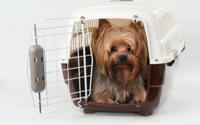 dog_in_travel_crate