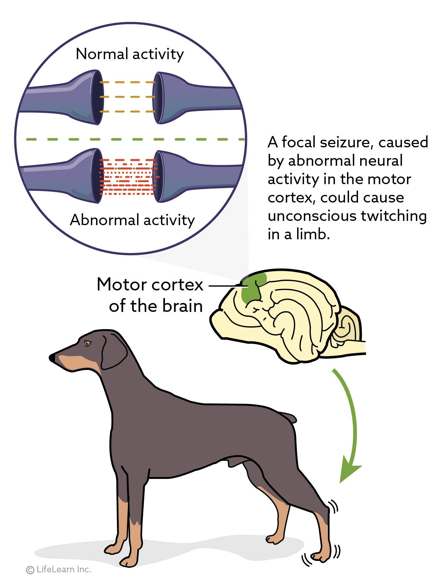 dog_focal_seizures_2017-01