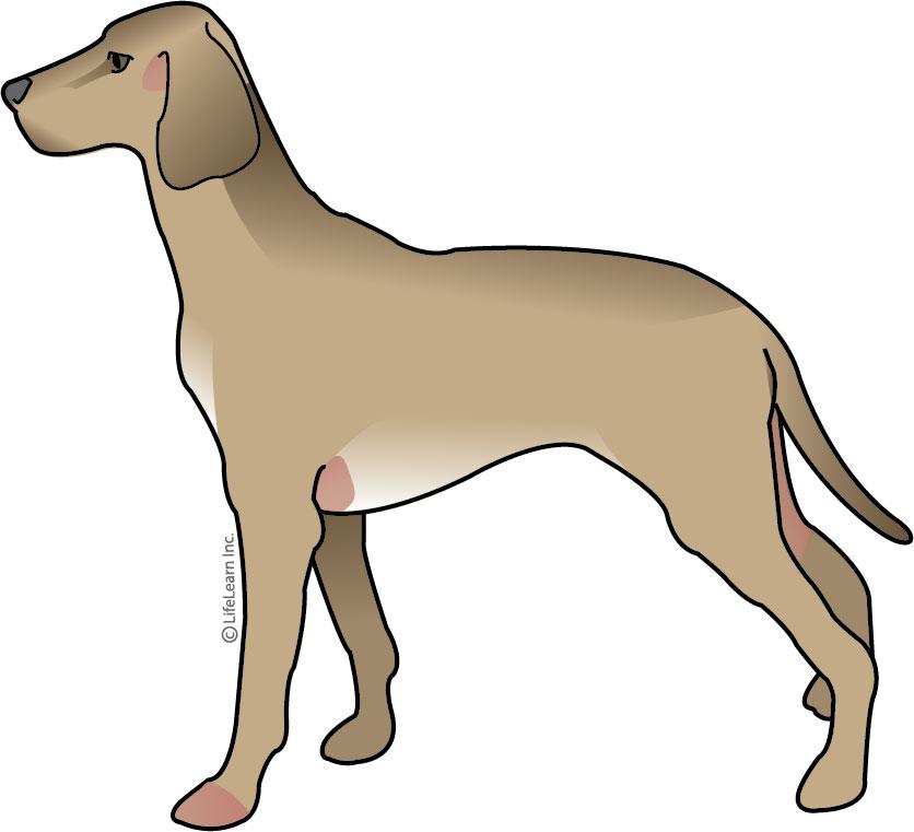 dog_allergy_atopy-02