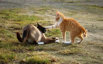 cat_spat